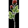 Red Rose - Biljke -
