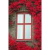 Red Window - Figure -