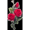 Red - 植物 -