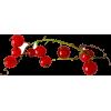 Red berry - Rastline -