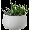 Room Plant - Rośliny -