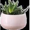 Room Plant - Plants -