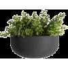Room Plant - Biljke -