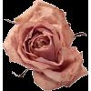 Rose Mauve - Rastline -
