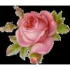 Rose - Plantas -