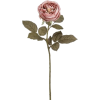 Rose - Pflanzen -