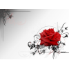Rose Red - Fundos -