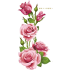 Roses - Other -