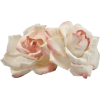 Roses - Pflanzen -