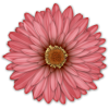 Scrapbook Flower Daisy Mum Sticker - Plantas -