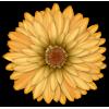 Scrapbook Flower Daisy Mum Sticker - Plants -