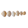 Sea Shells Beige - 小物 -