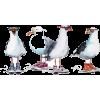 Sea Gulls - Illustraciones -