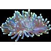 Sea creatures - Animales -