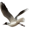 Seagull - Animais -