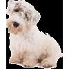 Sealyham Terrier - Životinje -