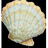 Sea shell - Objectos -