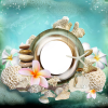 Seashells - Background -