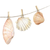 Shell - Items -