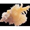 Shell - Predmeti -