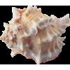 Shell Beige - Zwierzęta -