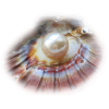 Shell Colorful - Animals -