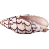 Shells - Przedmioty -