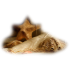 Shells Brown - Animals -