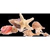 Shells - Natural -