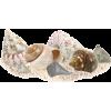 Shells - Priroda -