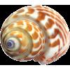 Shells - Natureza -