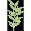 Silhouette - Pflanzen -