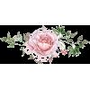 Single Pink Rose - Plants -