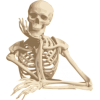 Skeleton - Ilustrationen -