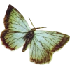 butterfly - 动物 -