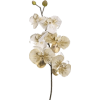gold glittered orchid - Piante -