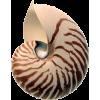 sea shell - 动物 -