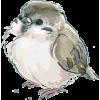 Small bird - Ilustracje -