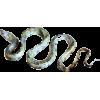 Snake - Niwi - Animals -