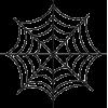 Spider Web - Uncategorized -