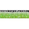 Spring Flowers - Uncategorized -
