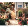 Spring garden - Plants -