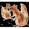 Squirrel - Ilustracije -
