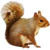 Squirrels - Animals -
