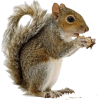 Squirrels - Animals -