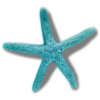 Starfish - Animali -