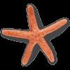 Starfish - Animales -