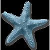 Starfish - Animais -