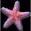 Starfish - 動物 -
