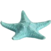 Starfish - Illustrations -